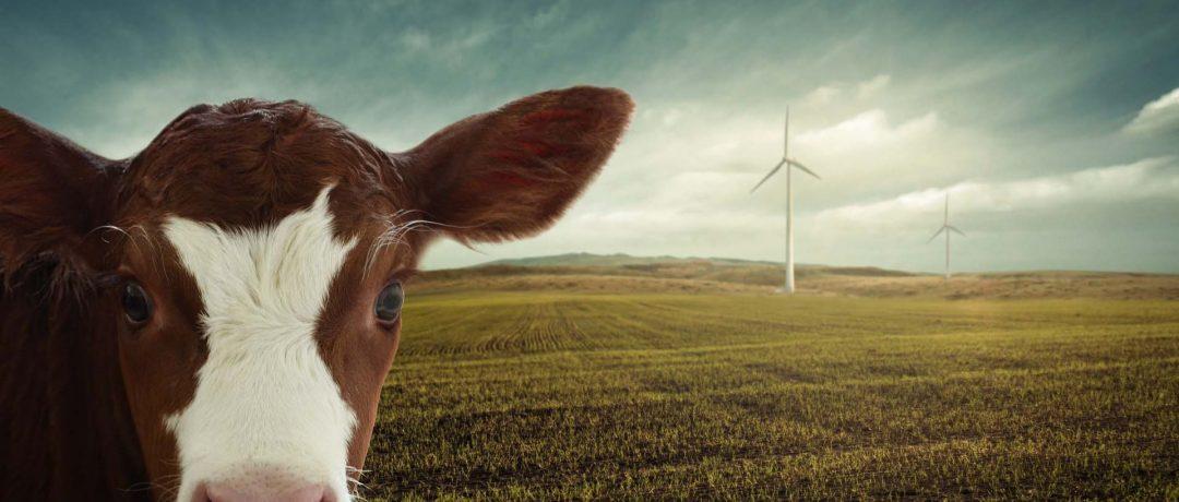 Personal | Vom Greenwashing, Billigfleisch und vertanen Chancen