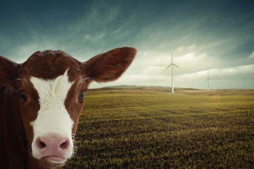 Personal   Vom Greenwashing, Billigfleisch und vertanen Chancen